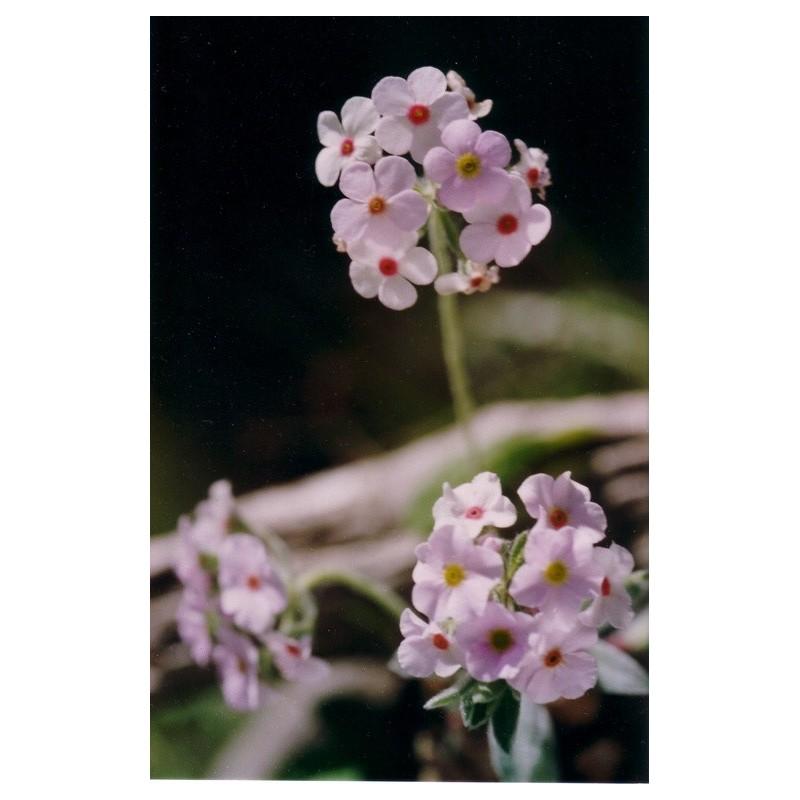 Children Flower Essenze Fiori Himalayani 15ml