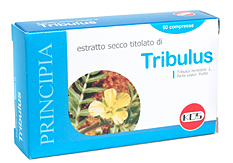 Tribulus Estr Sec 60cpr 21,5g
