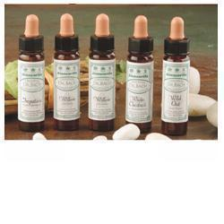 Image of Ainsworths Olive 10ml 906020274