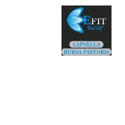 Image of Capsella Bursa Pa Estr Fl 30ml 910296476